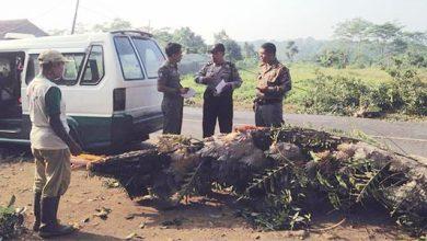 Pohon Mahoni Timpa Pengendara Motor Warungkiara 390x220 - Hendak Antar Isteri Kerja, Samsul Meninggal Tertimpa Dahan Mahoni