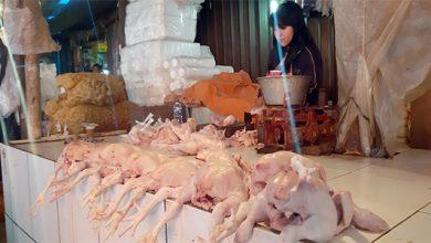 B JPG 16 390x220 - Harga Daging Ayam Mulai Terbang