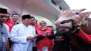 B . 390x220 - Telkomsel Serahkan 751 Hewan Kurban ke Seluruh Indonesia