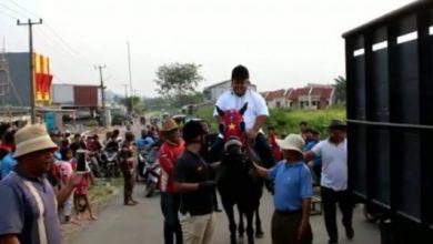 calon kades kuda 390x220 - Tunggangi Kuda Seharga Rp2 Miliar, Calon Kades Rasa Sultan