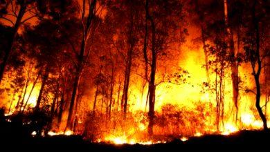 kahurtla 390x220 - 5 Hektare Lahan di Gunung Guruh Terbakar