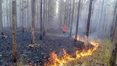 Kebakaran Hutan Sukabumi 390x220 - Lima Ha Hutan Sindangresmi, Jampang Tengah Terbakar