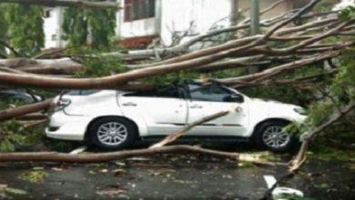 mobil cianjur 390x220 - Pohon Tumbang Hantam Mobil di Cianjur, di Dalam Ada Seorang Wanita