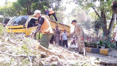 DLH Kota Sukabumi 390x220 - DLH Kota Sukabumi Segera Pangkas Pohon