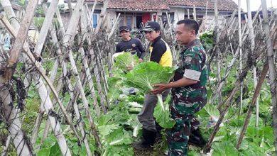 Desa Karawang 390x220 - Desa Karawang Panen Sayuran