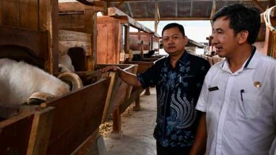 Hendar Darsono Peternak Domba 390x220 - Anggota Fraksi Demokrat Dukung Pengembangan Peternak Domba di Jawa Barat