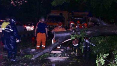 Pohon Tumbang Bogor 390x220 - Hujan Deras Guyur Kota Bogor, Pohon Tumbang Lihat Videonya