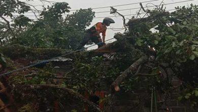 Pohon Tumbang Nagrak 390x220 - Pohon Tumbang, Satu Rumah Warga Nagrak Rusak