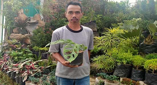 Janda Bolong Merambah Kota Sukabumi Radarsukabumi Com