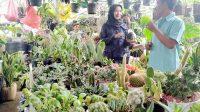 Pedagang Tanaman Hias Sukabumi
