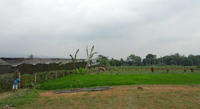 Desa Sukamahi