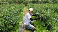 Himpunan Petani Muda Sukabumi