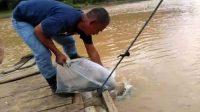Tebar Benih ikan