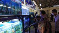 sentra ikan hias Bogor