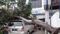 Pohon Tumbang Bogor